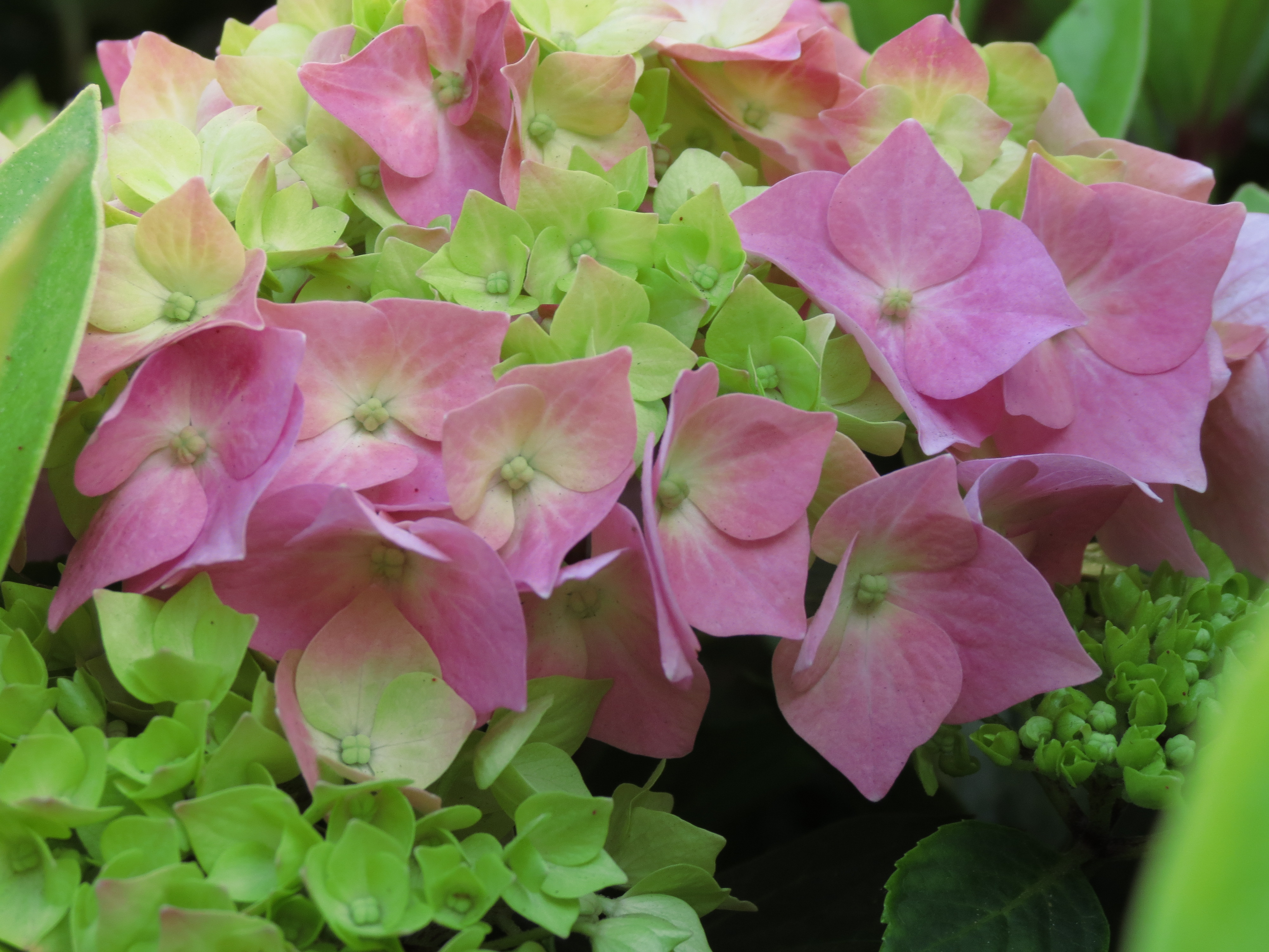 Pink And Green Flowers A Creative Mind Abroad