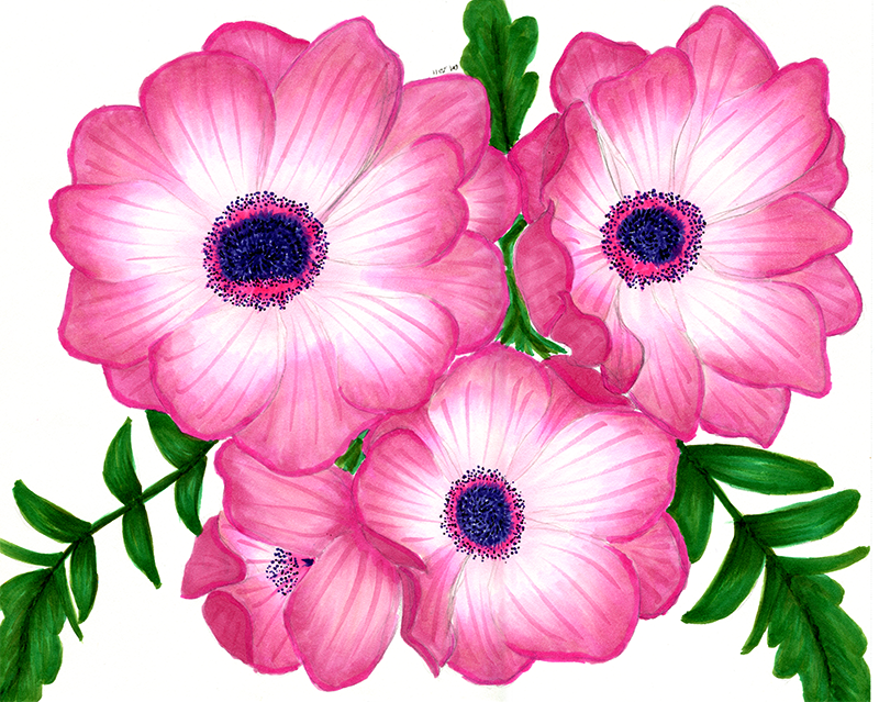 Inspirations And Creations Pink Poppies