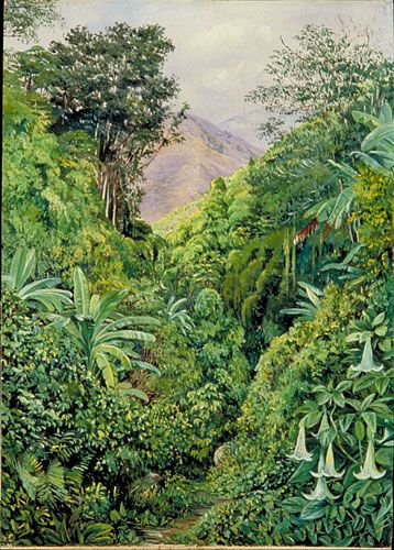 Marianne North-Valley behind the Artist's House at Gordonstown, Jamaica