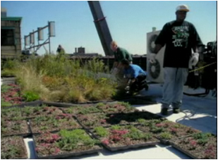 Greening the ghetto
